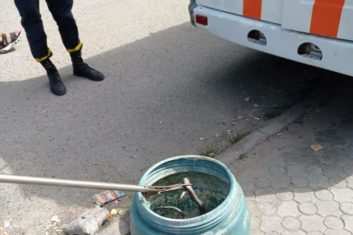 У Дніпрі біля житлового будинку виловили метрову змію. Фото пресслужби ГУ ДСНС в Дніпропетровській області