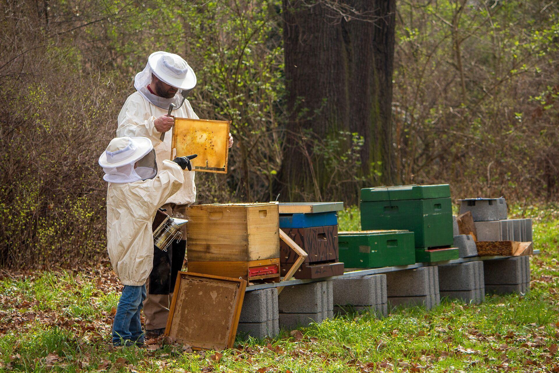 В Медовый Спас пчеловоды достают соты из ульев и святят их в церкви
