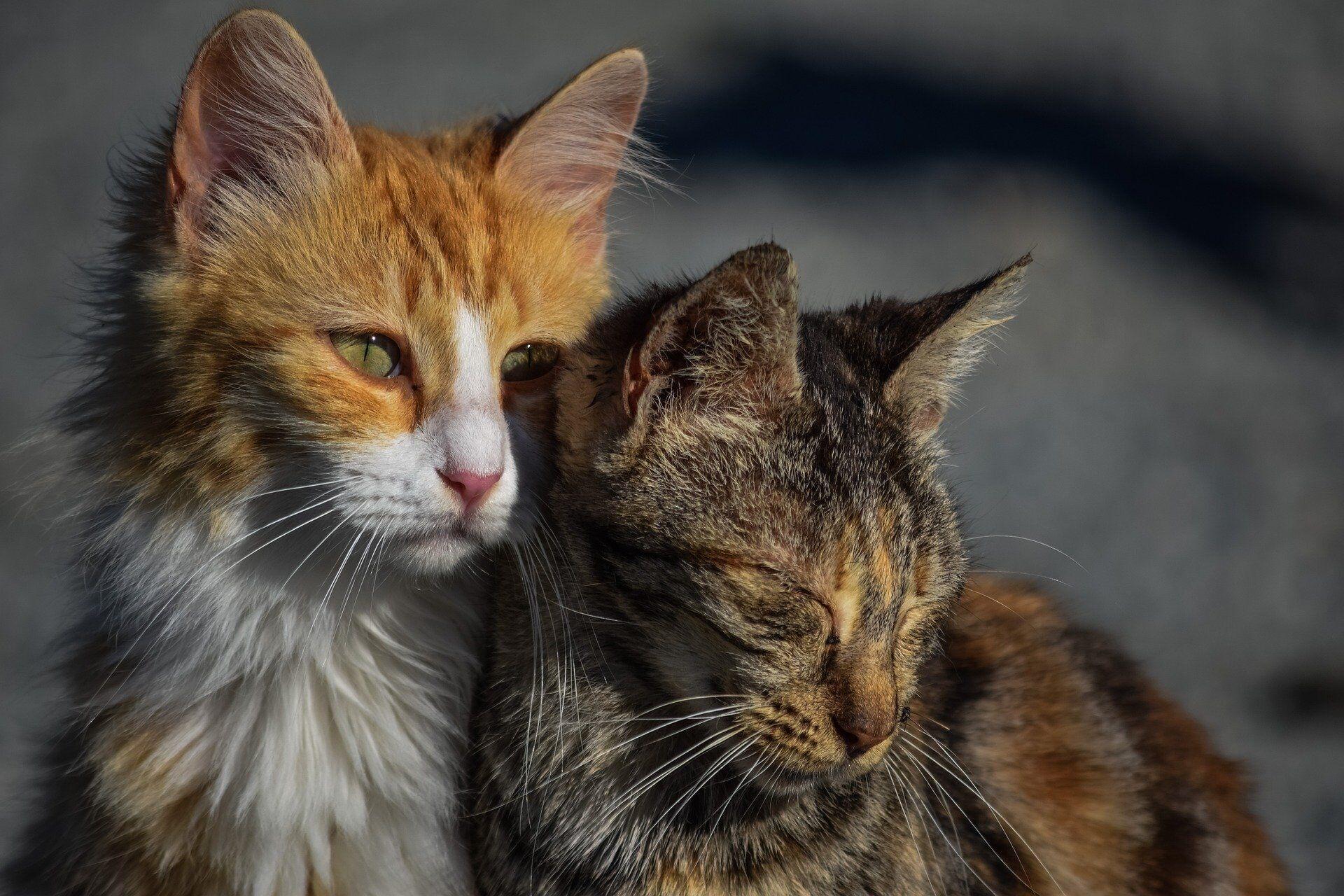 Международный день бездомных животных: что это за дата