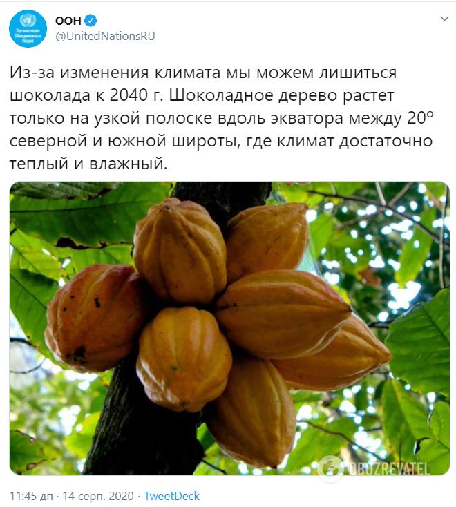 Прогноз об исчезновении шоколада от ООН