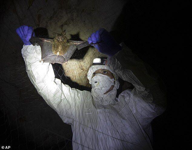 Трое шахтеров, которые удаляли фекалии летучих мышей умерли от вируса.