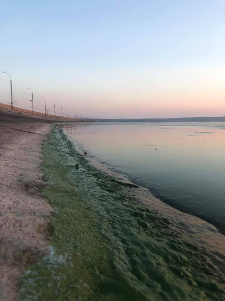 "Река Днепр активно ""цветет"". Фото очевидцев"