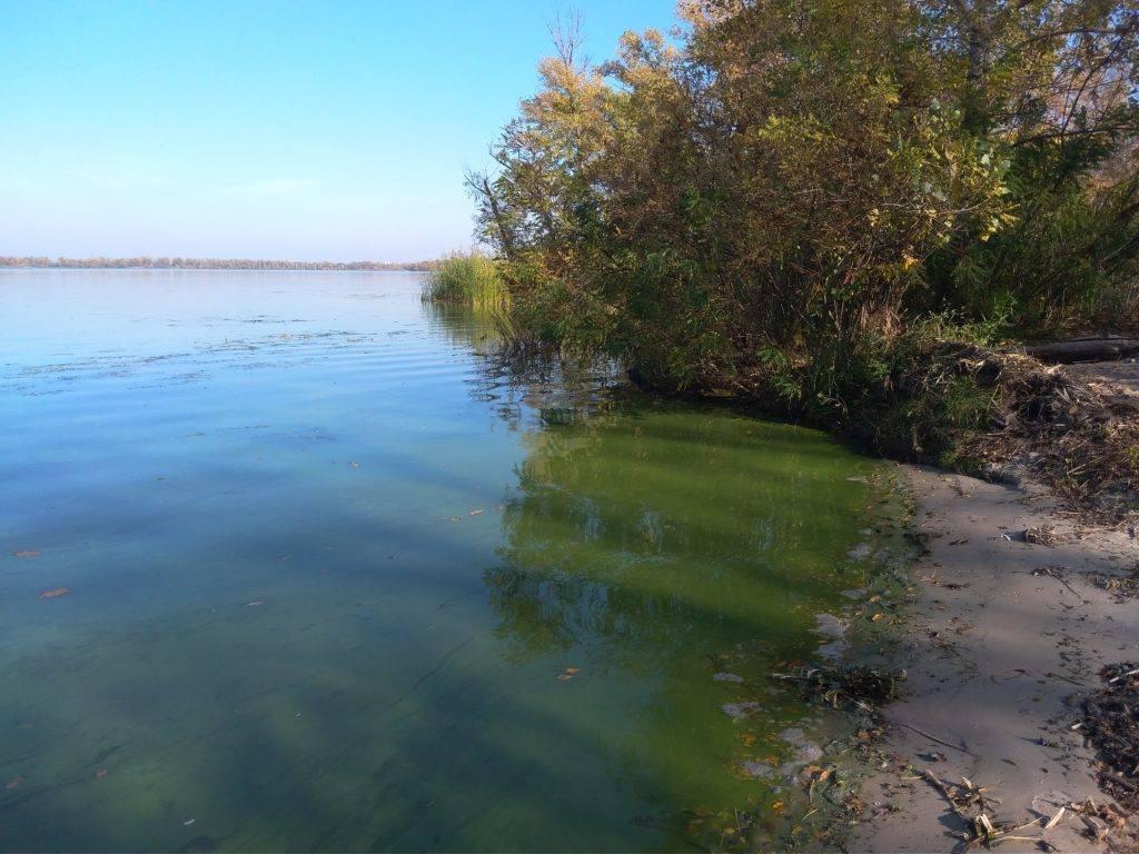 Берег реки покрылся зеленой жижей. Фото очевидцев