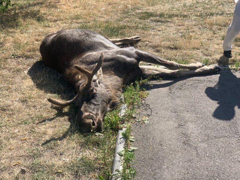У Києві тварина загинула після ДТП