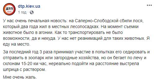 Допис про лося в Києві