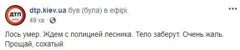 Допис про загибель лося в Києві