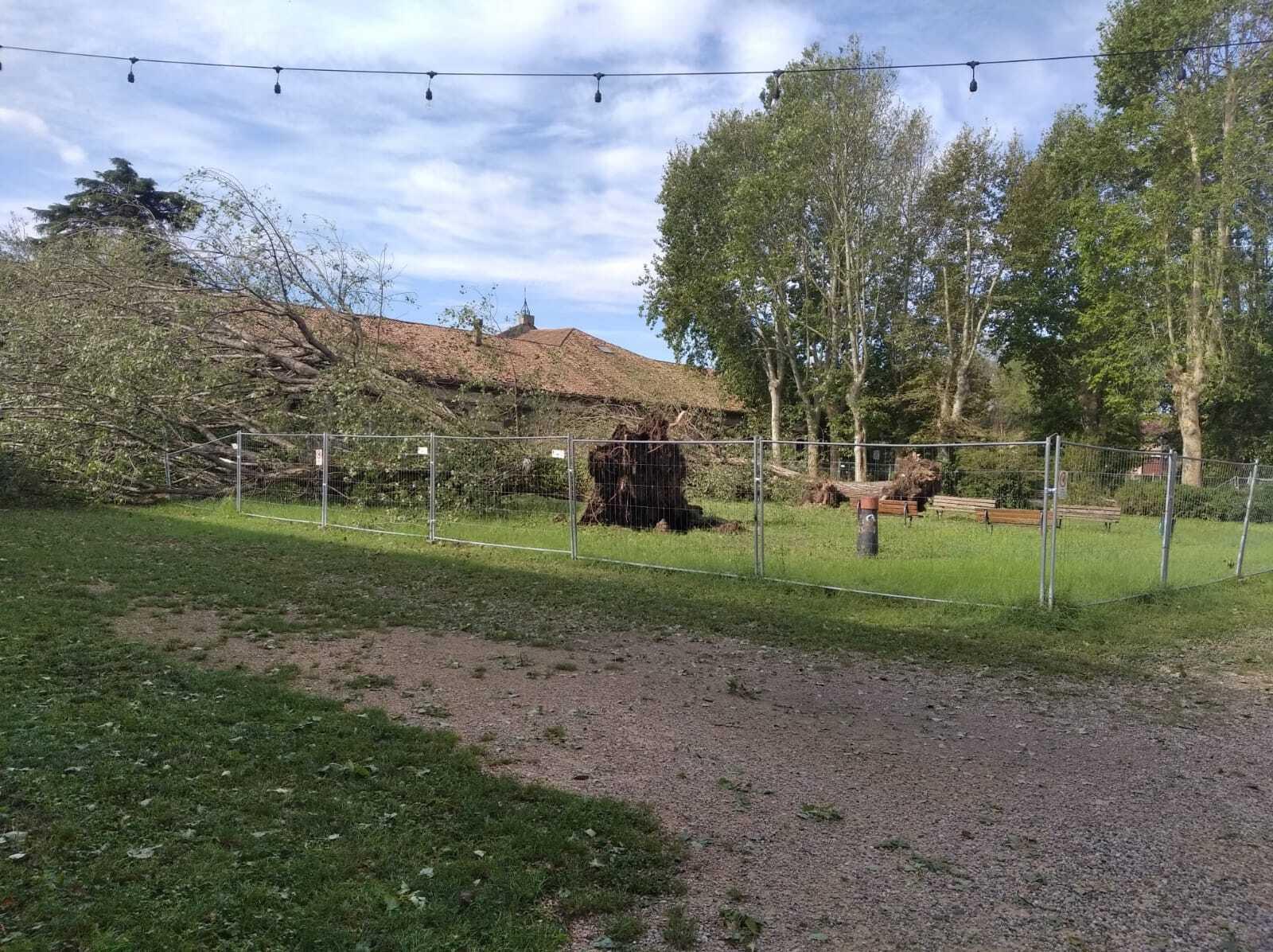 Ураган в Вероне вырвал деревья с корнями.