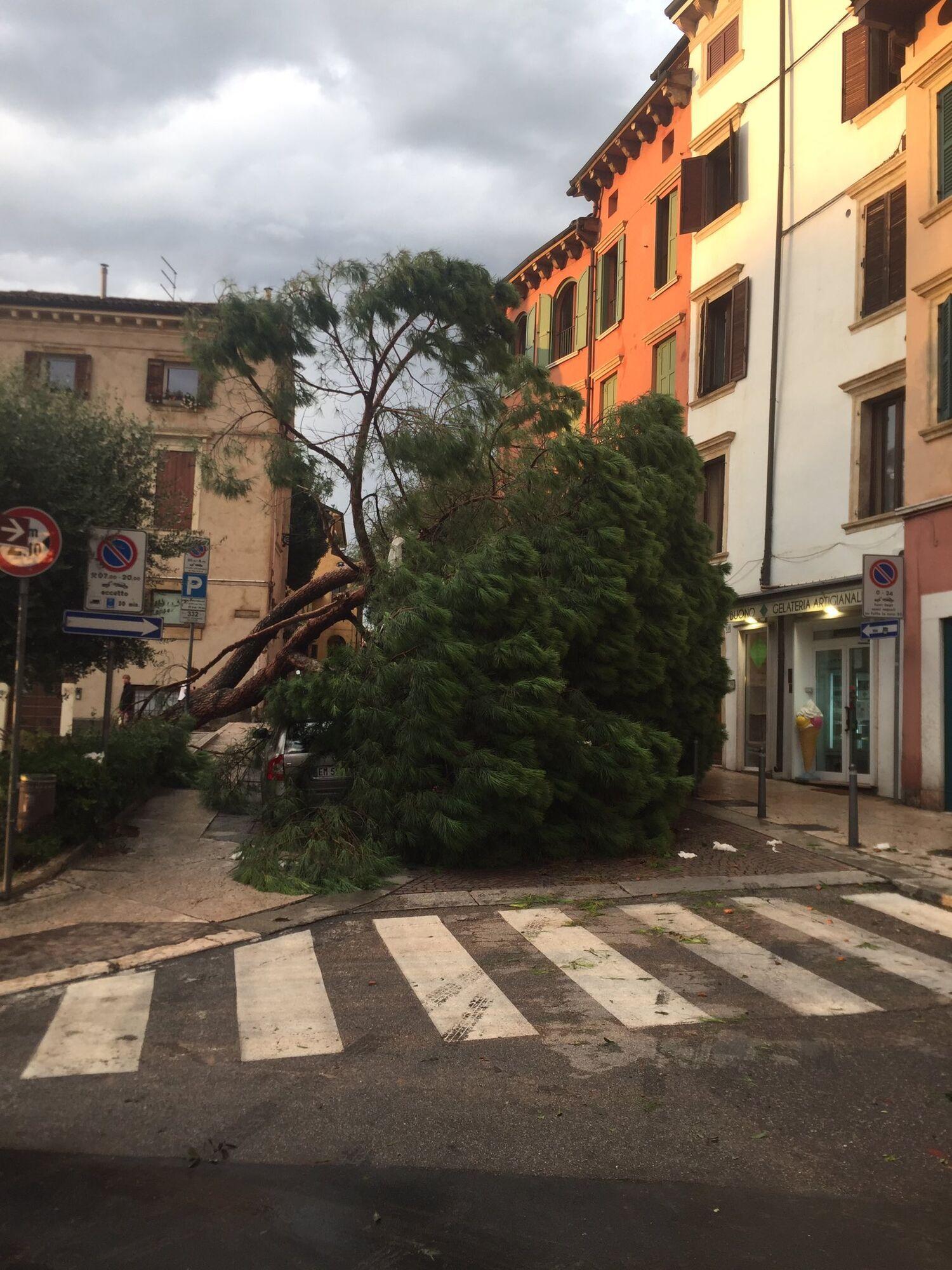 Ураган выкорчевал деревья в Вероне.