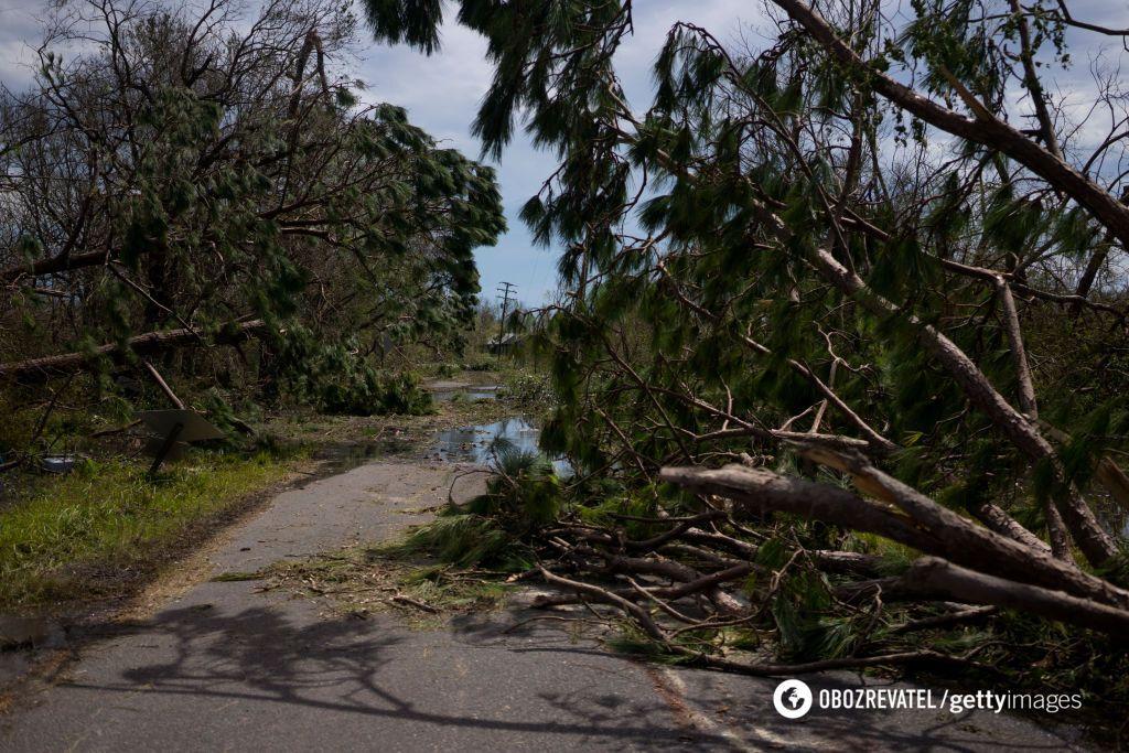 Деревья повалило на землю