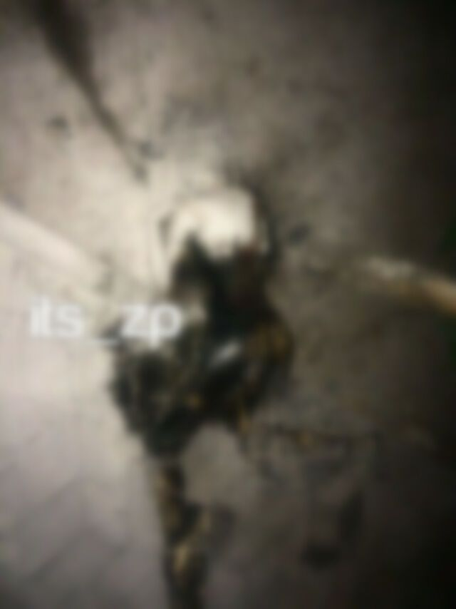 В Запорожье нашли обгоревшее тело девушки