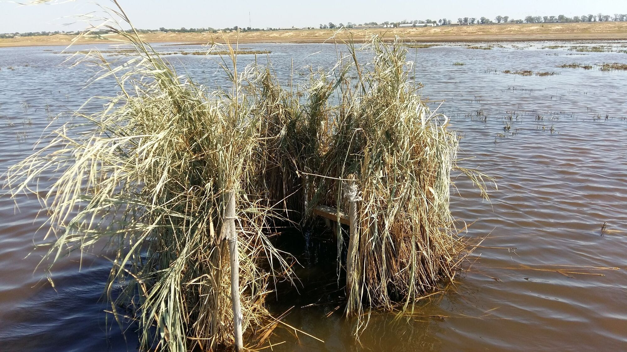 В Одеській області град убив 10 лелек