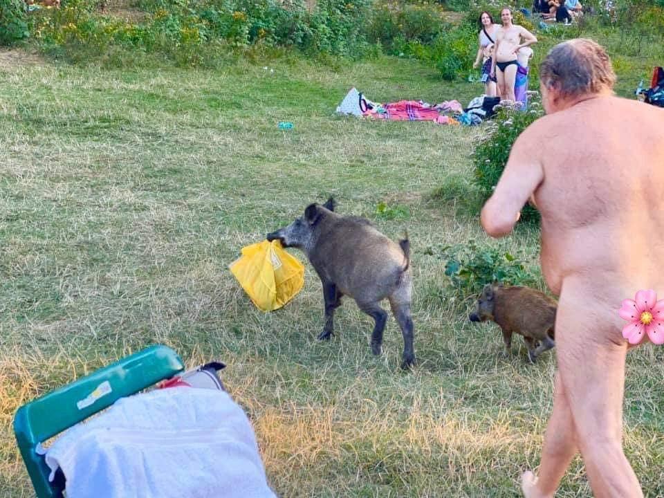 У Німеччині голий чоловік ганявся за кабанами.