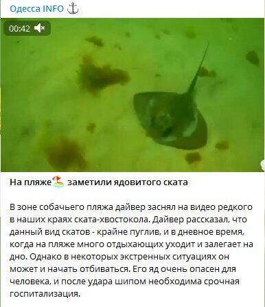 В Одессе на пляже заметили ядовитого ската: после удара – срочная госпитализация
