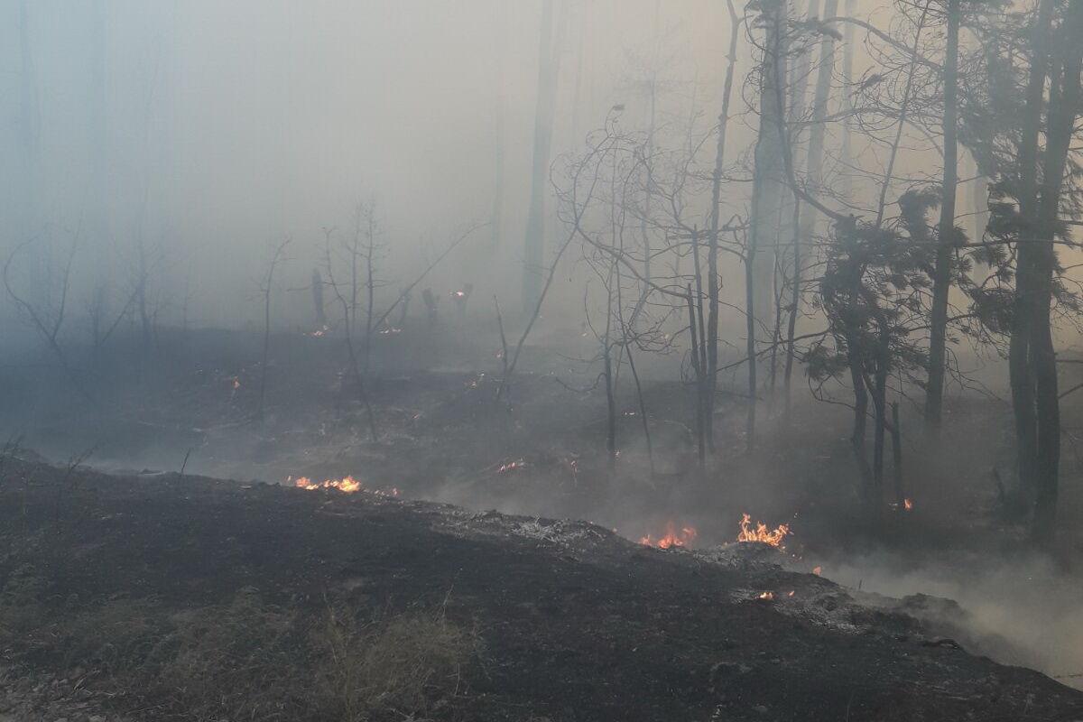 На Харьковщине загорелся лес.
