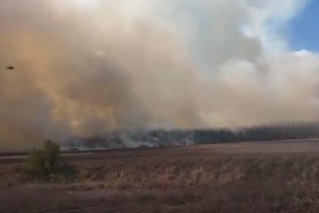 Під Києвом спалахнула масштабна лісова пожежа