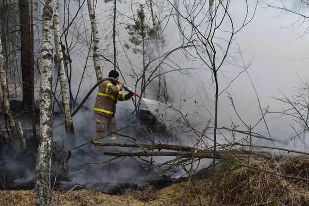 На Житомирщині розгорілися нові пожежі