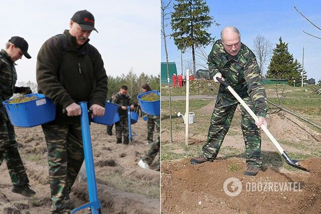 Олександр Лукашенко посадив сосни в розпал коронавірусу