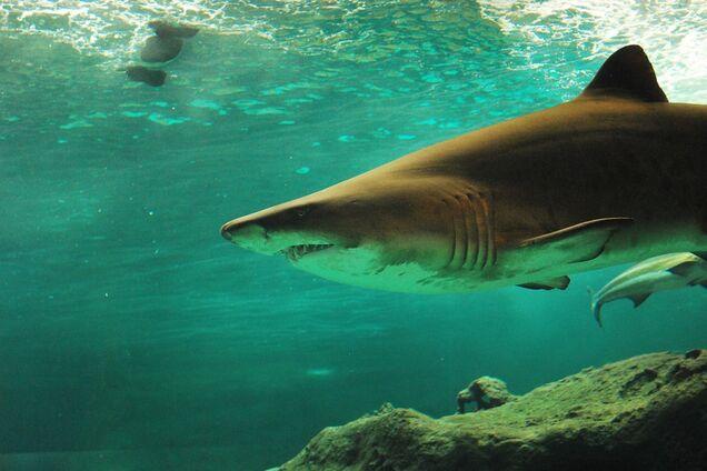 Яйца откладывают 30% акул