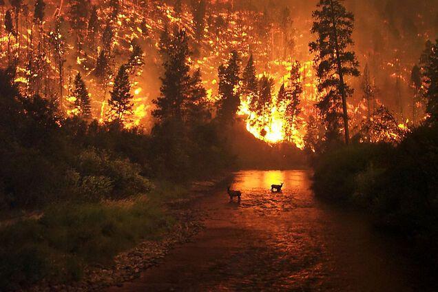 Засуха, ураганы и саранча: что еще угрожает миру в 2020 году