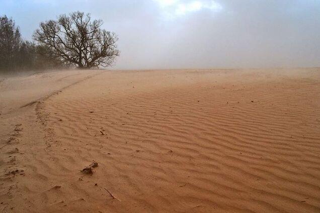 Так виглядають поля на Чернігівщині після сильного вітру