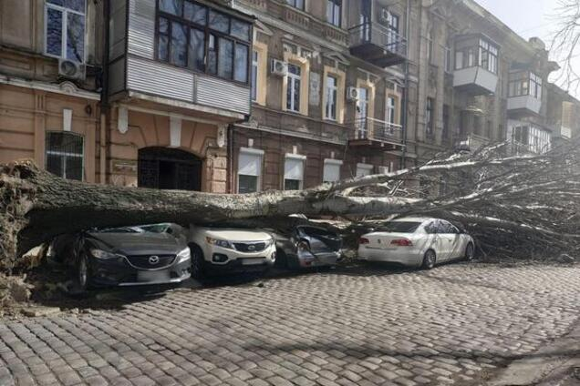 Одесситка отсудила у мэрии 6 тыс. долларов за упавшее на ее автомобиль дерево