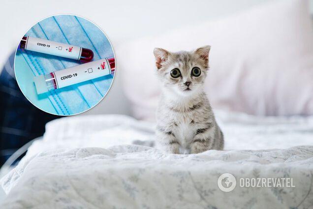 Хворі на COVID-19 і коти. Ілюстрація