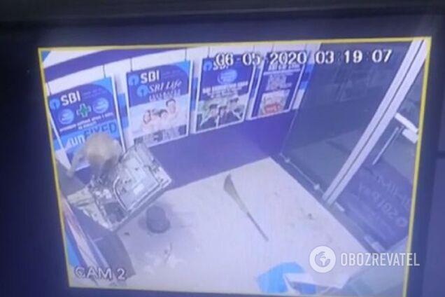 """В Індії мавпа-""""ведмежатник"""" легко розкрила банкомат"""