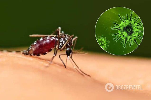 В МОЗ ответили, могут ли насекомые переносить COVID-19