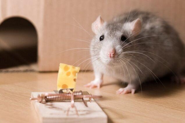 П'ять невідомих фактів про сир