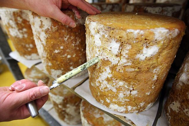 Сир з пліснявою