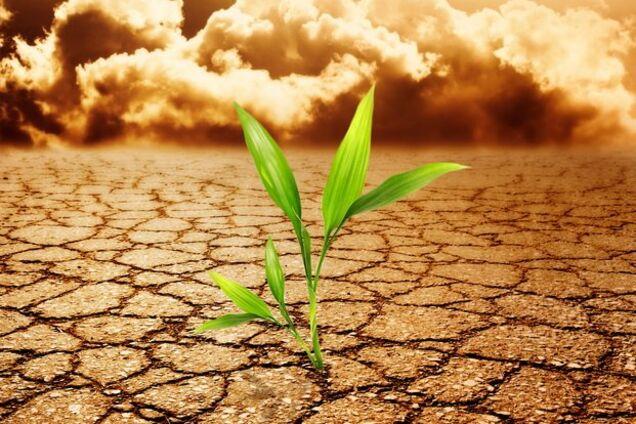 """""""10 лет улучшения не будет"""": Украине предрекли засуху и рост цен на продукты"""