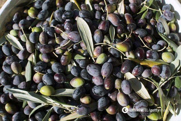 Оливки: від убивці ракових клітин до основ гурманських страв