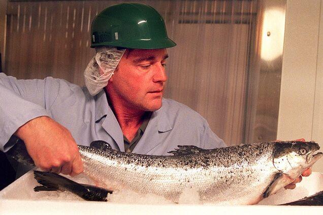 Фермерський лосось