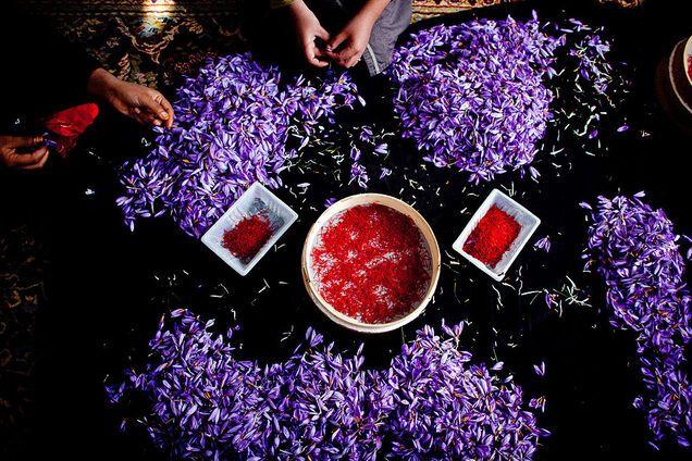 Процес отримання шафрану з пелюсток квітів