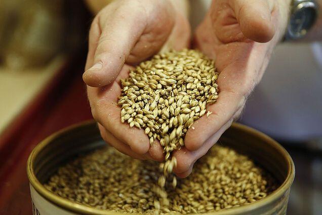 Ячмінь - відмінне джерело білка, вітамінів і мінералів