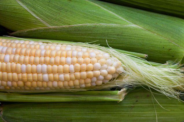 Кукурудзяні рильця захищають від запалень
