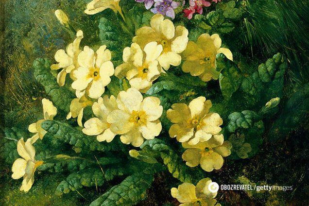 Первоцвіт використовується в салатах, супах, омлетах