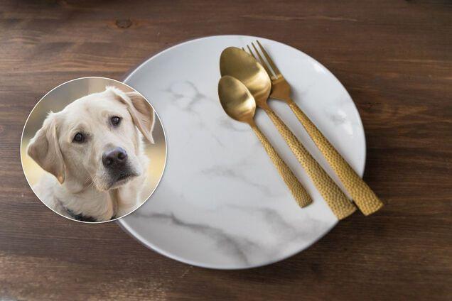 Мужчина накормил семью собакой