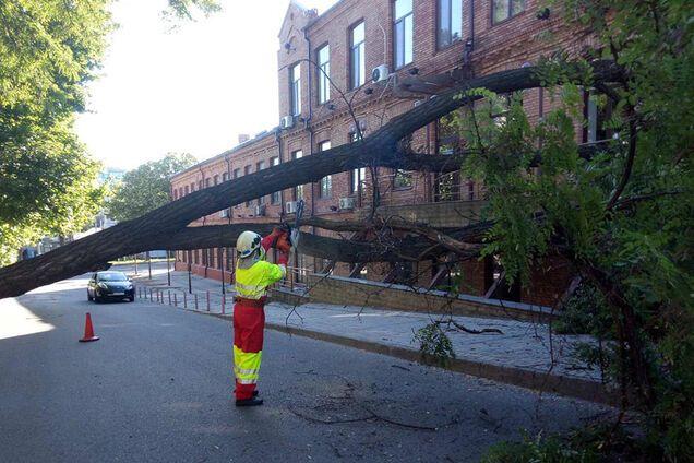 Дерево завалило переулок Ушинского