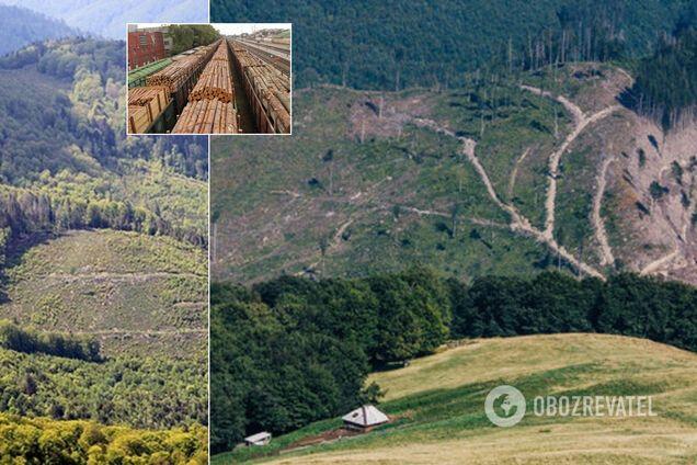Ліс у Карпатах опинився на межі зникнення