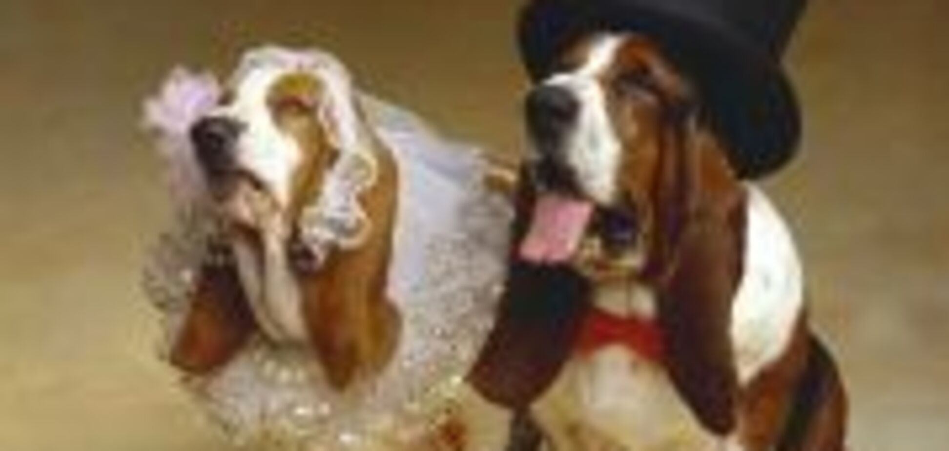 Собаче весілля по-американськи