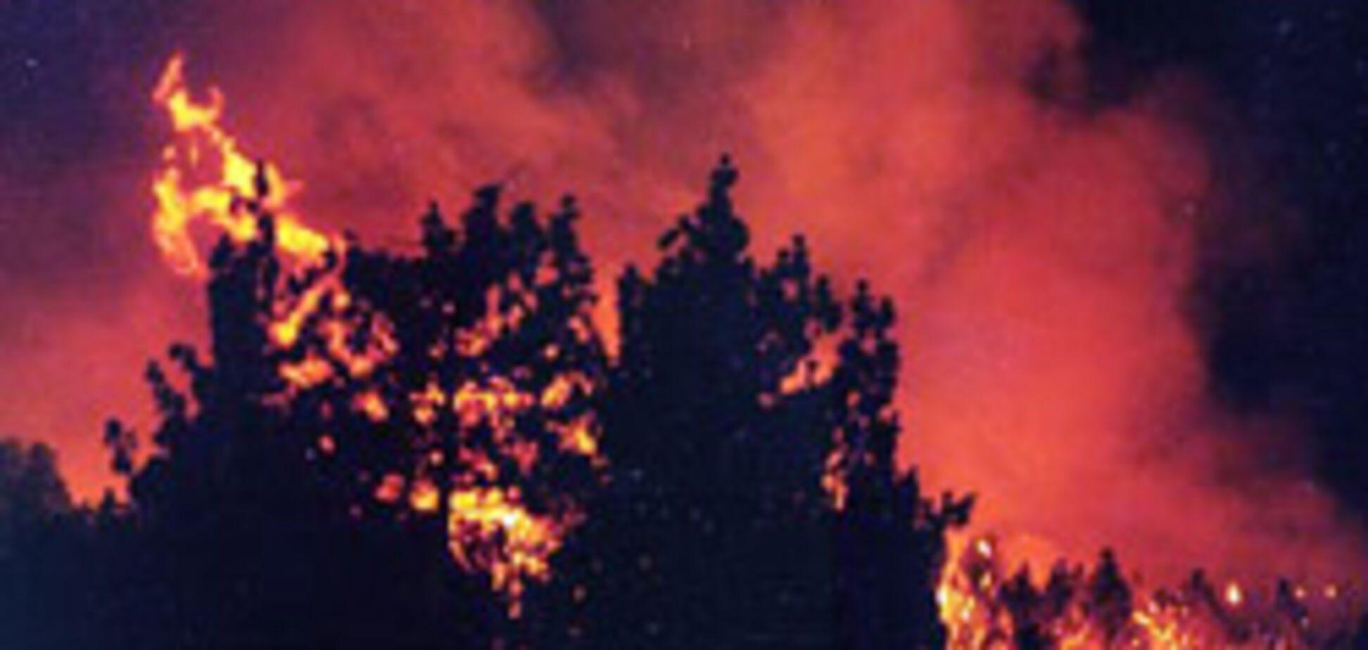 Австралія згорає в лісових пожежах