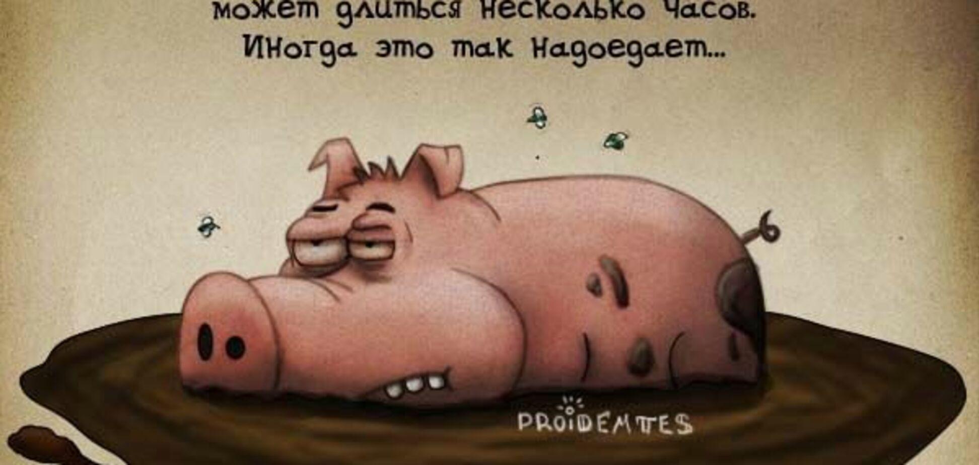 Креатив від poidamtesa: Оргазм свині, миші на Місяці і зайці