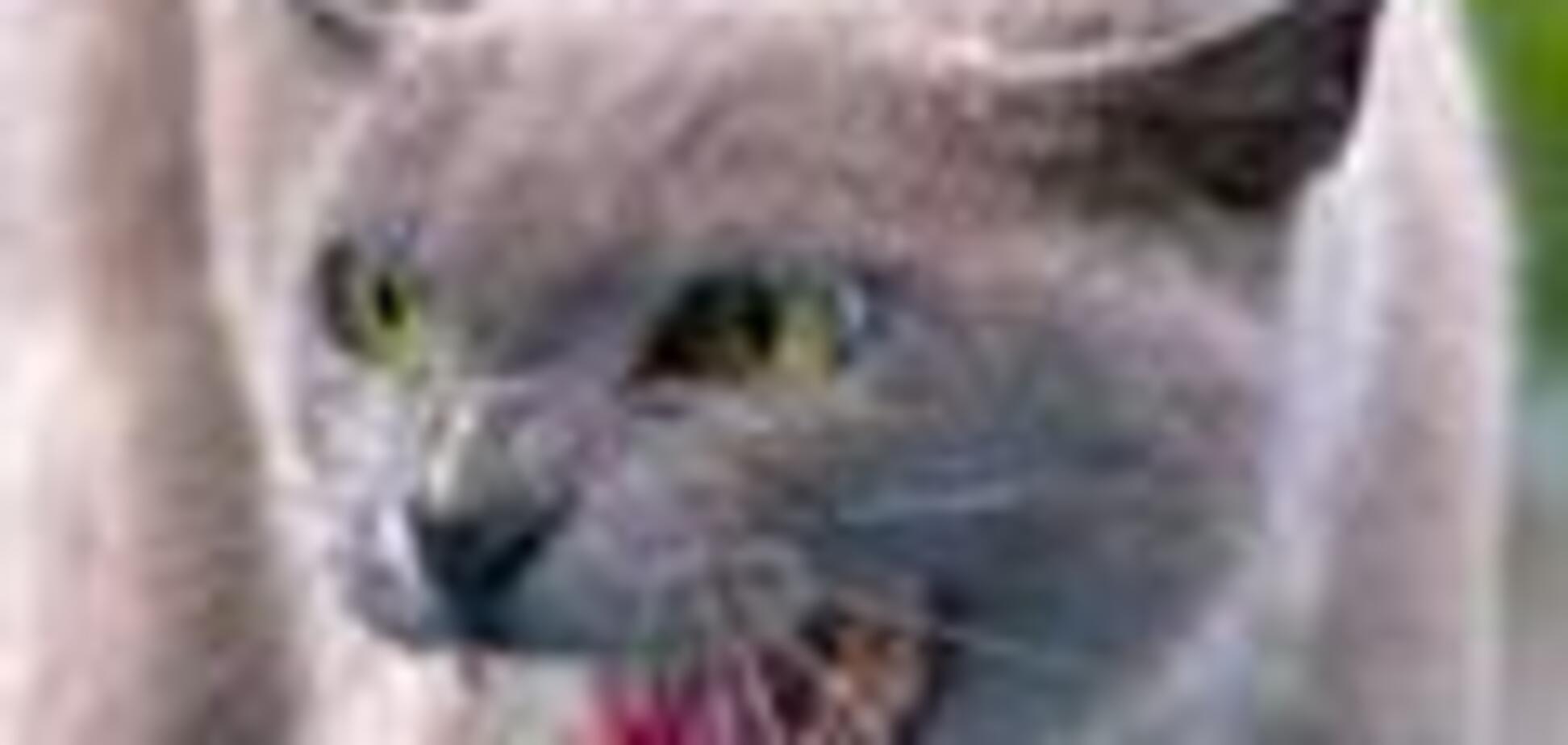 Бешеная кошка искусала двоих на Винничине