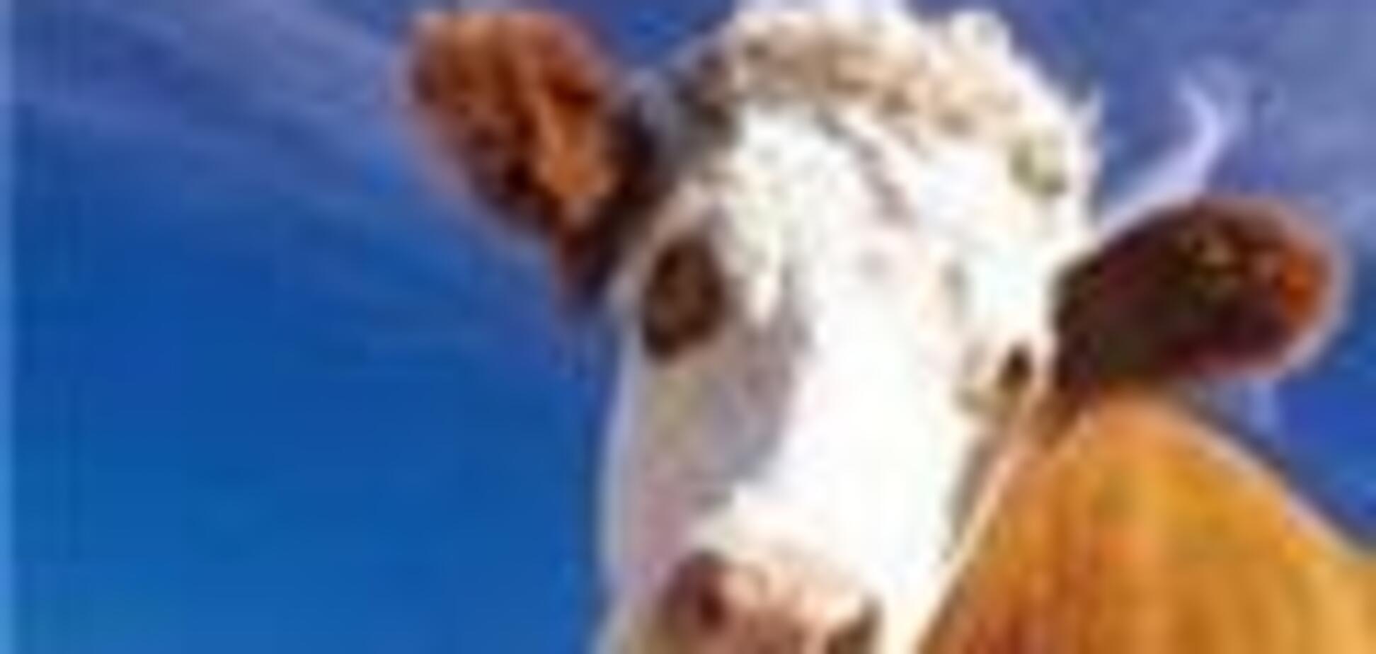 Литвин и Порошенко показали пример доения коров