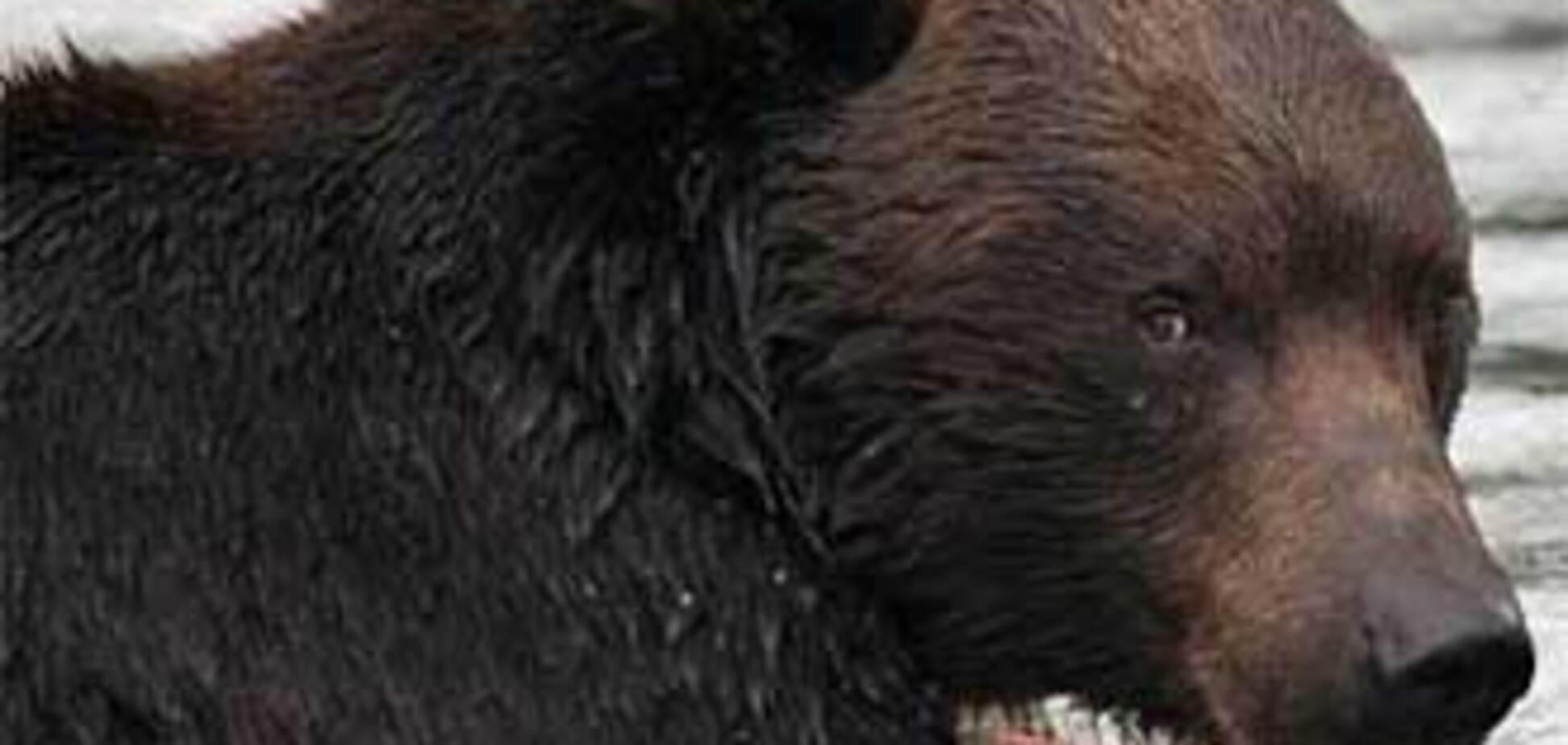 Семья из трех человек убежала от медведя