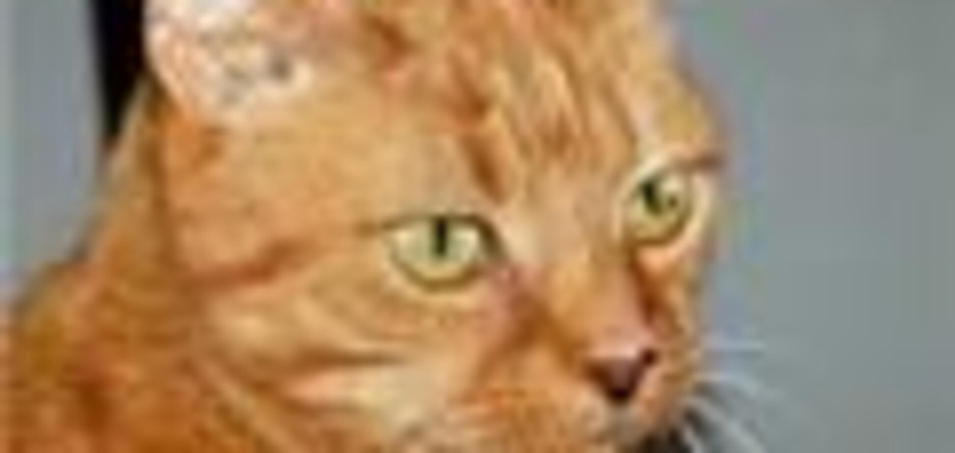 Голландский кот пережил полчаса машинной стирки