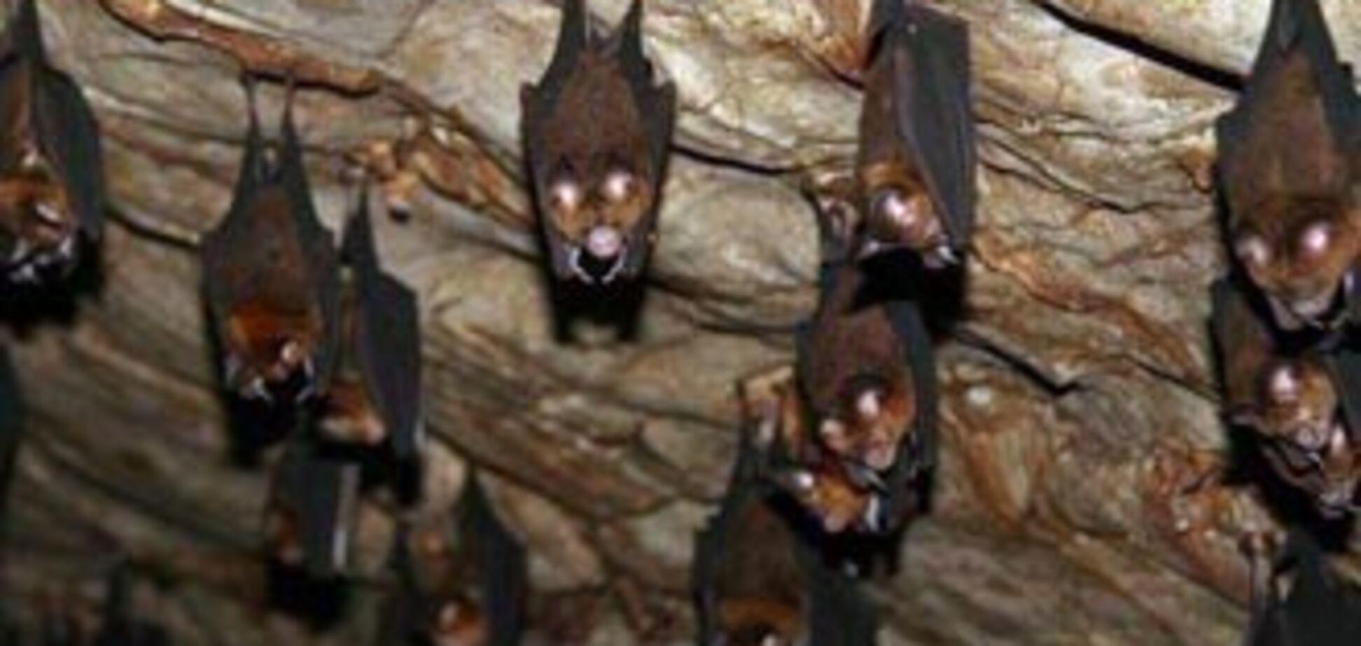 У квартиру чернівчанки увірвалися 74 кажани
