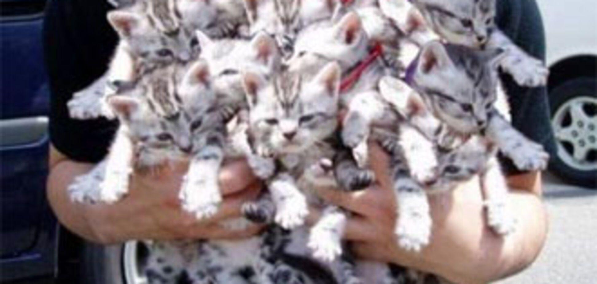 У Китаї врятували від поїдання зграю котів