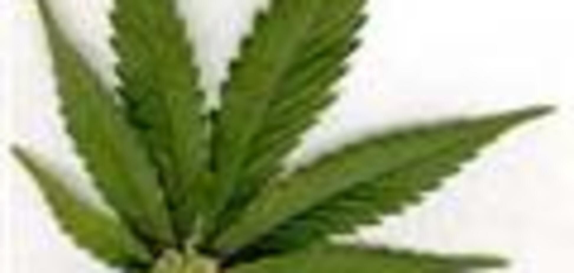 Конфісковано дві тонни марихуани